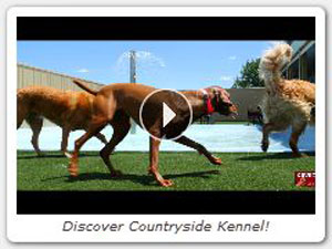Discover Countryside Kennel!