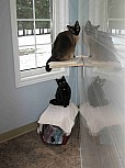 cattery-06.jpg: 766x1024, 115k (December 10, 2015, at 05:56 AM)