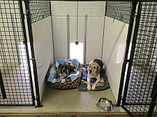 Dog kennel at Countryside Kennel, London, Ontario