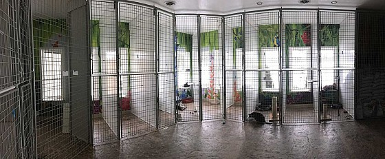 The cattery at Countryside Kennel, London, ON